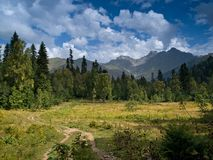 Alpine grasslands Stock Photography