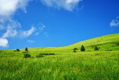 Alpine green meadow in mountains Stock Image