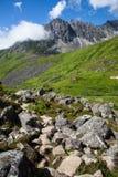 Alpine Greenery Stock Image