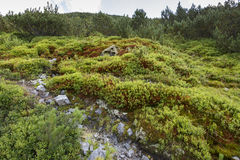 Alpine habitats Stock Images