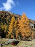 Alpine Herbstlandschaft lizenzfreie stockbilder