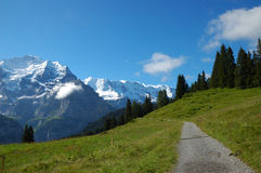 Alpine Hiking Trail. Summertime on an alpine hiking trail in the Swiss Alps with the beautiful snowcapped peaks of the Bern Oberland in the background Royalty Free Stock Photography