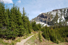 Alpine hiking trail. An alpine hiking trail in waterton lake national park, canada Stock Images