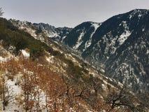 Alpine hillside Stock Images