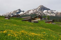Alpine houses near Grindelwald. Switzerland. Grean meadow with with yellow flowers on the foreground Stock Photos