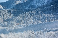 Alpine hut in wintery forest, Bavaria, Germany Royalty Free Stock Images