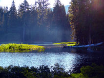Alpine lake. Blue Alpine lake in the middle of a pine forest Stock Image