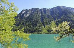 Alpine lake achensee with turquoise water Stock Image