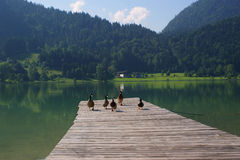 Alpine lake -Austria - Thiersee Royalty Free Stock Photo