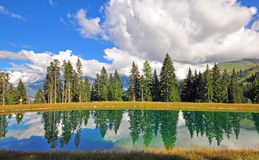 Alpine lake in the forest Stock Images