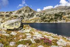 Alpine lake,high mountains and lpink rhododendron flowers,Carpathians,Romania Stock Image
