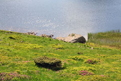 Alpine lake Nesamovyte on summer mountains Stock Photography