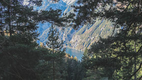 Alpine lake with pine trees