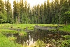 Alpine lake sun set Stock Images