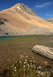 Alpine Lake and White Flowers. Banff national park, alberta, canada Stock Photos
