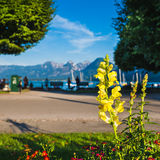 Alpine Lakeside with a Beautifull Yellow Blossom in the Foregrou Stock Photos