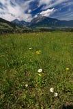 Alpine landscape Royalty Free Stock Images