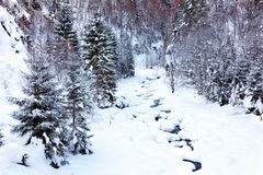 Alpine landscape. With creek in the winter Stock Image