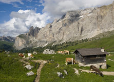 Alpine landscape. European alps, Italian Dolomites Panorama during a bright blue summer day Stock Images
