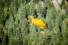 Alpine landscape in autumn Royalty Free Stock Images