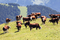 Alpine landscape with cows Royalty Free Stock Images