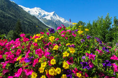 Alpine landscape and flowers Royalty Free Stock Images