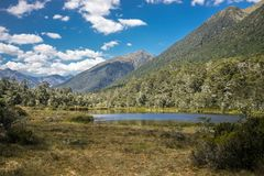 Alpine landscape with forest, lake, cloud reflection. New zealand nature Stock Images