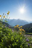 Alpine landscape with globe flowers and spiked rampion. On a bright sunny day in june Royalty Free Stock Photography