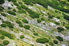 Alpine landscape in with junipers Royalty Free Stock Photos
