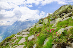Alpine landscape with mountain flowers, Austria Royalty Free Stock Images