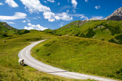 Alpine landscape and mountain road Stock Photos