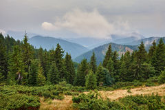 Alpine landscape with pine forests Stock Image