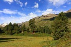Arolla pine forest near Obergurgl, Ötztal Alps in Tyrol, Austria royalty free stock images