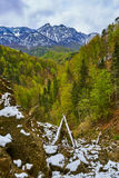 Alpine landscape in the spring Stock Photography