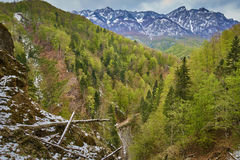 Alpine landscape in the spring Stock Images