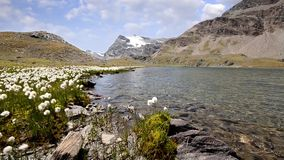 Alpine landscape in summer stock video footage