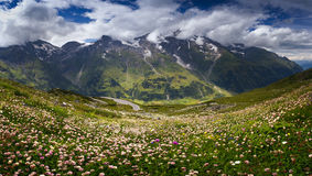 Alpine landscape in the summertime. Stunning summer view on the Grossglockner High Alpine Road in Austrian Alps with beautiful flowers (clovers) in foreground Royalty Free Stock Photos