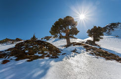 Alpine landscape, a tree in the rays of the bright sun. Austrian Royalty Free Stock Image