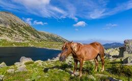 Alpine Landschaft im Sommer, in den Transsilvanische Alpen, mit wilden Pferden auf grüner Weide Lizenzfreies Stockfoto