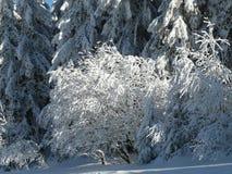 Alpine Landschaft im Winter unter frisch schneiendem Schnee lizenzfreie stockfotos