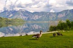Alpine Landschaft mit einer Gruppe Enten stockbilder