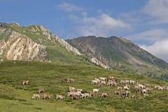 24/5000Alpine lato w wysokich górach Obraz Royalty Free