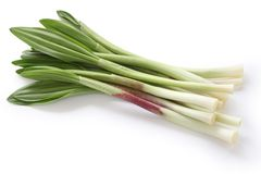 Alpine leek, victory onion. Is a broad-leaved species of wild onion stock images