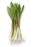 Alpine leek, victory onion Royalty Free Stock Images