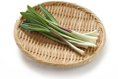 Alpine leek, victory onion Stock Photo