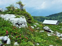 Alpine livestock farms and stables on the slopes of Churfirsten mountain range in the Toggenburg region. Canton of St. Gallen, Switzerland royalty free stock image