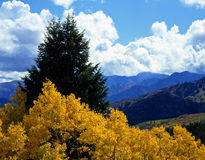 Alpine Loop Aspens (H) Royalty Free Stock Image
