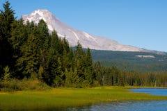 Alpine marsh. The edge of a mountain lake meets the land Royalty Free Stock Photos