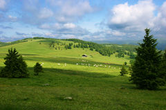 Alpine meadow. With firs, a cows herd, a farm and cloudy sky Stock Photo