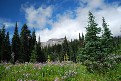 Alpine_meadow Imagem de Stock Royalty Free